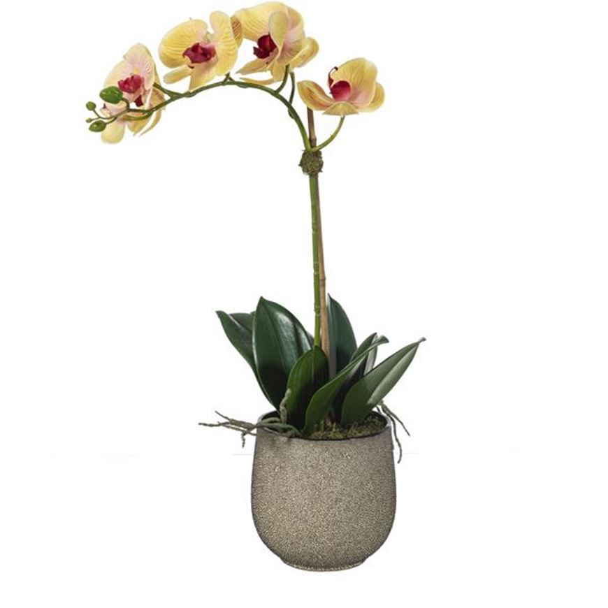 Picture of ORCHID pot h60cm yellow/multicolour