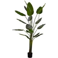 TRAVELLERS palm tree h240cm green